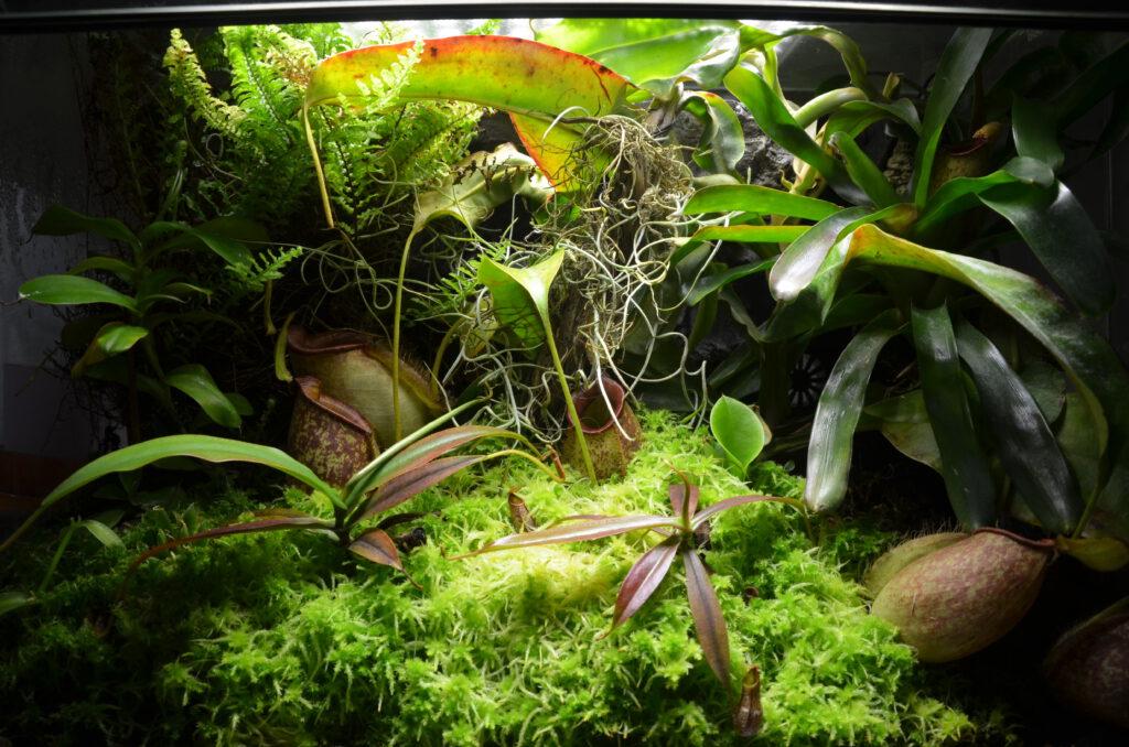 Nepenthes-Terrarium mit Mischbepflanzung